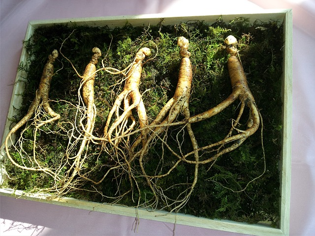 3.1 Ginseng - www.ogd2012.at